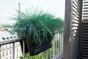 jardinière suspendue appartement