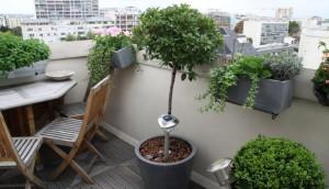 plantes balcon appartement