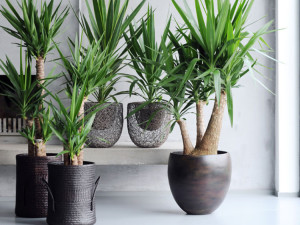 D corer son salon avec des plantes nos conseils for Belle plante exterieur