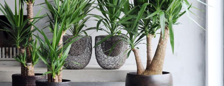 décoration salon yucca